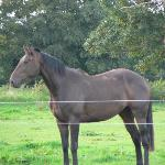  One of the Farm&#39;s Horses