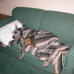 anotherIn the Residence Inn, our dog was sleeping comfortably.