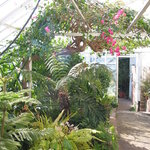 Tropical foliage in the greenhouse
