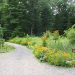 New England Wild Flower Society Garden in the Woods