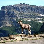 Logan Pass Local