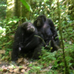 Kibale National Park