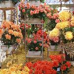 Buga 07 flower display