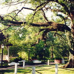 Evangeline Oak