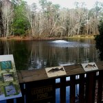 Oatland Island Wildlife Center