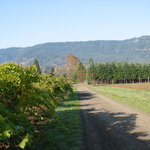 HillCrest Winery and Distillery