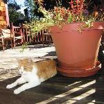 Dexter the cat on sunny deck
