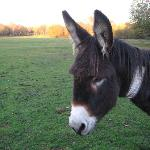 Donkey 300 metres from Hotel