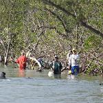 manatees examining the fisherman