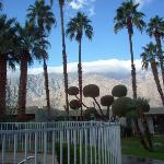 Desert Isle of Palm Springs Foto