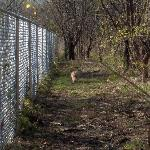Arlington Dog Park - a fenced in mini forest