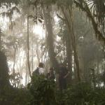 The magic cloud forest at pachijal