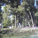  The forest near the hotel
