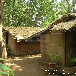 Native Architecture 100% natural