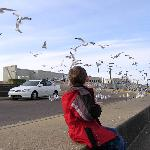 Watching the gulls swarm for a handout.