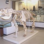 University Museum of Zoology
