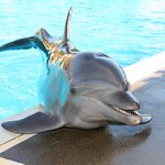 Dolphin Adventure by Vallarta Adventures