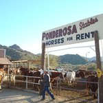 Arizona Horses (Ponderosa Stables and South Mountain Stables)