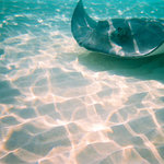 Carson's Stingray City Tours