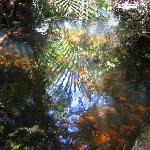reflected beauty in a forest pool