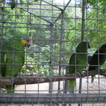 Parrots in their cage