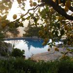 The pool through the lemon trees