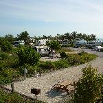 Campsites at Curry Hammock