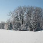  view from cabin after snowfall