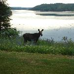 View from front window-with a moose