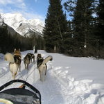 Snowy Owl Sled Dog Tours Foto