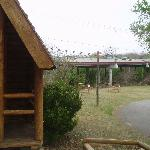 Photo de San Antonio KOA Campground