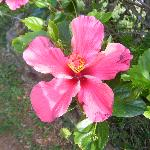 hibiscus flowers are everywhere