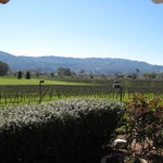 View of the vineyards from the patio