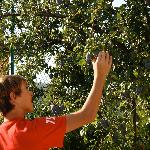 Our son checking out the fruit trees