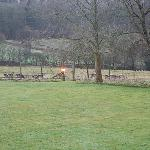 Deer in the grounds (view from our window)