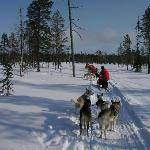 Dog Sled in Lapland, Finland