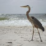 johnson beach perdido key fl