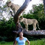  Posing with the lions