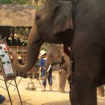 Maesa Elephant Camp