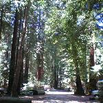 Φωτογραφία: Big Sur Campground & Cabins