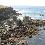 Mendocino Coast Botanical Gardens