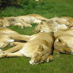 West Midlands Safari and Leisure Park