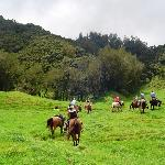 A trail ride at Na'alapa Stables