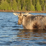 Northwoods Outfitters Wildlife Tours