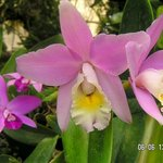 Pregetter's Orchid Garden