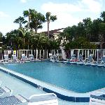 the Palm Manor Resort pool