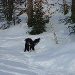  my dog tearing up the new snow 2003