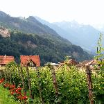  Vaduz - Prince&#39;s vineyard and castle