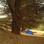 Bodega Dunes Campground