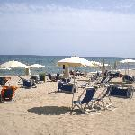  spiaggia mare pineta
